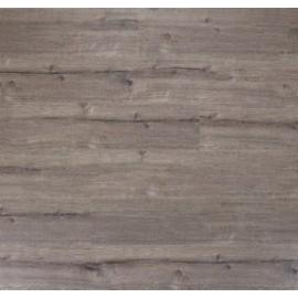 Дуб англи́йский темно-серый
