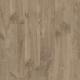 Дуб Луизиана коричневый