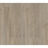 Серо-бурый шелковый дуб